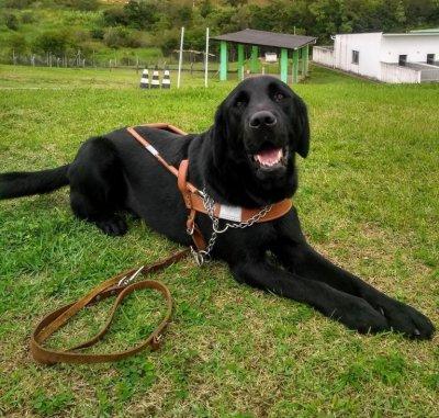 Atletas Paralímpicos ganharão cães guias do Governo Federal